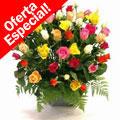 50 Rosas SUPER OFERTA, Mexico, Motul-Yucatan