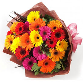 Gerberas and Colors <b>OFERTA</b>